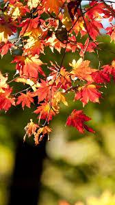 Wallpaper Autumn, Leaves, Bokeh, 5k ...