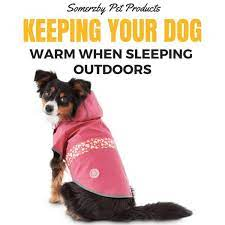 For dogs, mild hypothermia begins to set in when. Should My Dog Sleep Indoors Or Outdoors And Is It Cruel To Keep Him Outdoors