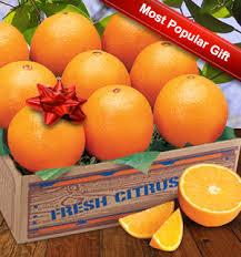 florida navel oranges our most por gift