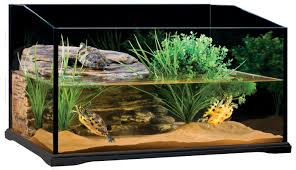 Turtle Tank Decor Turtle Tank Archives Info Turtle