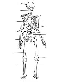 Small Picture Label of Human Skeleton in Human Anatomy Coloring Pages Label of