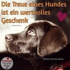 Die Treue Eines Hundes Ist Ein Sonias Sprüche Bilder Facebook