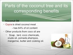 coconut tree ppt  coconut milk candies animal feeds 5