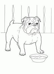 Small Picture Havanese favorite Dog Colouring pages Pinterest