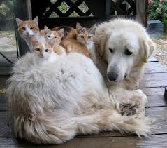 Οι γάτες είναι πιο έξυπνες από τους σκύλους(;)...