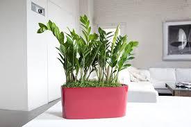 Plant Interior Design Interesting Ideas