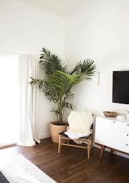 palm tree bedroom decor u2016 sistem as corpecollush roomindoor plants decoration room bedroom bedroom corner