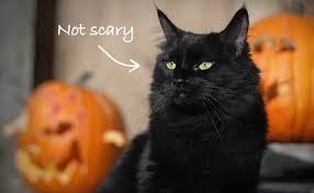 halloween black cat.  Halloween Inside Halloween Black Cat W
