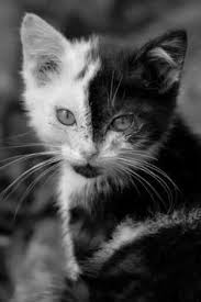 dog and cat black and white.  And OH BUT Iu0027M IN LOVE AT FIRST SIGHT  Cute Cats And Dog Cat Black White I