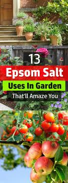 epsom salt gardening. Those Who Use It Swear That Using Epsom Salt On Plants Make Them Lush And Healthier Gardening