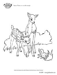 Coloriage Cerfs Biches Et Faonslllll