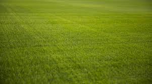 green grass texture of a soccer field premium photo green p77 green