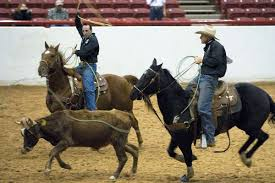 about team roping horses