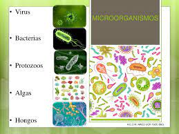 Calaméo Udi Microorganismos 1 Eso Ana E O M