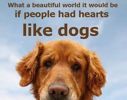 Quotes About Dogs Mesmerizing 48 Inspirational Dog Quotes Dog Quotes And Proverbs Pinterest