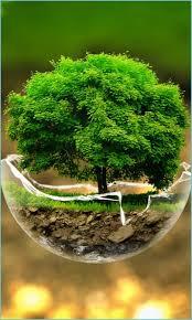 Mobile Beautiful Nature Wallpaper Hd ...