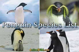 Types Of Penguins List Of All Penguin Species With