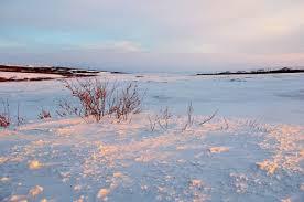 Tundra Biome Climate Location Temperature Precipitation