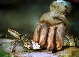 In Venomous Avoid 6 Georgia To Snakes Georgia U6tdUwq