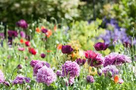flowers for garden. Flowers For Garden Y