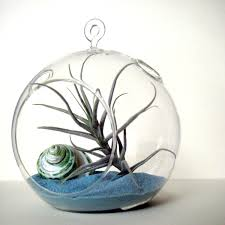Air Plant Terrarium Air Plant Terrarium Ideas Home Design Ideas