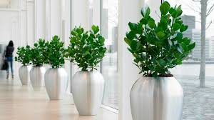 interior landscaping office. Interior Surrey Office Landscaping