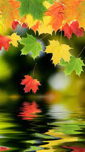 Maple Leaf Android Wallpapers 1080p ...