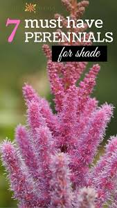 Small Picture Best 25 Shade perennials ideas on Pinterest Shade plants Shade
