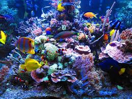 Allestimento di un acquario di barriera reef aquarium