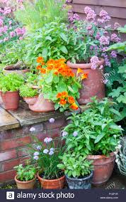 Kitchen Garden Herbs Garden Lifestyle Still Life Arrangement Kitchen Garden Herbs