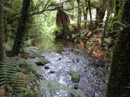 Image result for beautiful streams