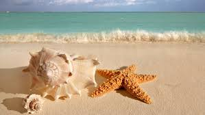 Image result for seashell photo