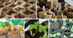 what you need to know about seed