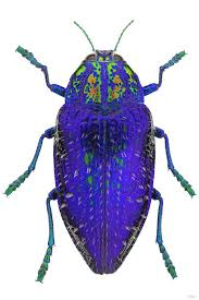 Interview: Tulsa artist Bob Sober gives insects their close-up in ...