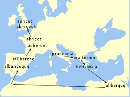 Apricot Wikipedia