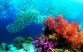 High Definition Pictures Ocean Wallpapers High Resolution 71 Images