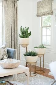 Plants In Living Room Awesome Decorating Ideas