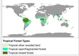 Learn about deforestation rates and other land use practices, forest fires, forest communities, biodiversity and much more. Tropical Forest Wikipedia