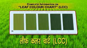 Fall Leaf Color Chart