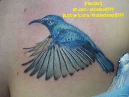 синяя птица колибри добавлено максим андреев