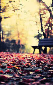 Autumn Wallpaper For Android ...
