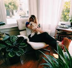 10 non toxic and dog safe houseplants