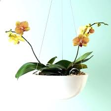 metal plant hangers wrought iron hanging plant holders mounted flower pots off the wall metal hanging