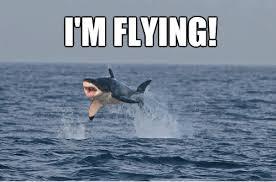 i am flying funny shark meme