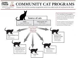 Kitten Socialization Chart Stray Animals Thomas Park Avondale