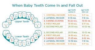 Which Baby Teeth Fall Out Chart Woollahra Dental August 2017