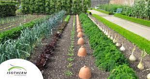 veggie garden in south africa