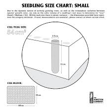 Tree Root Size Chart Montezuma Cypress Small Tree Seedling