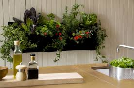 Indoor Kitchen Gardens Similiar Indoor Wall Herb Planter Keywords