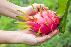 How Does Your Dragon Fruit Grow  Serious EatsDragon Fruit On Tree